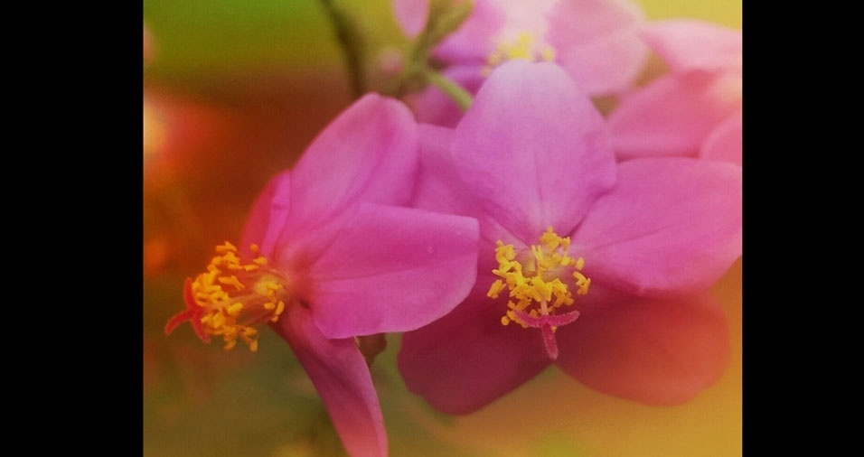 """Raimunda Viana da Silva, Rio Branco (AC): """"Estas são as flores do jardim da minha mãe, Dona Nazir"""""""