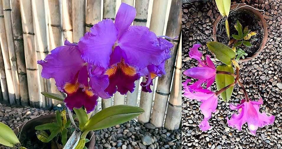 Dom Lucas Coelho nos enviou lindas fotos das flores e plantas do Mosteiro Cela São José, em Itapecerica da Serra (SP)