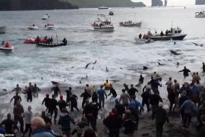 Reprodução/Facebook/Sea Shepherd