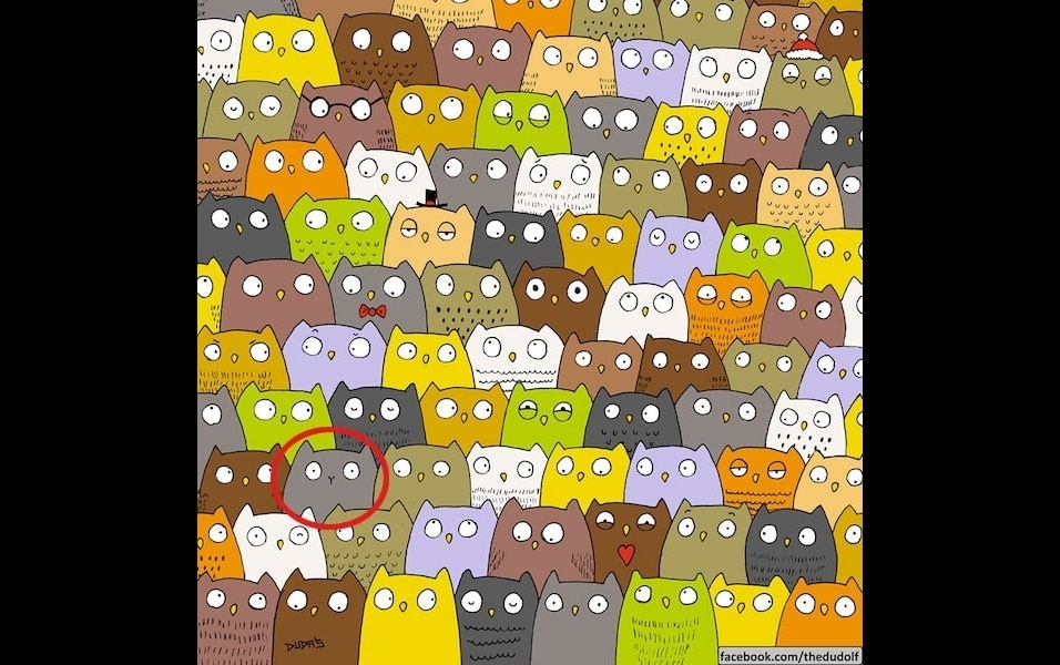 24.dez.2015 - No destaque em vermelho está o gatinho perdido no meio das corujas no desafio criado pelo desenhista húngaro Dudolf. Perceba que a única diferença é o detalhe no nariz do bichano