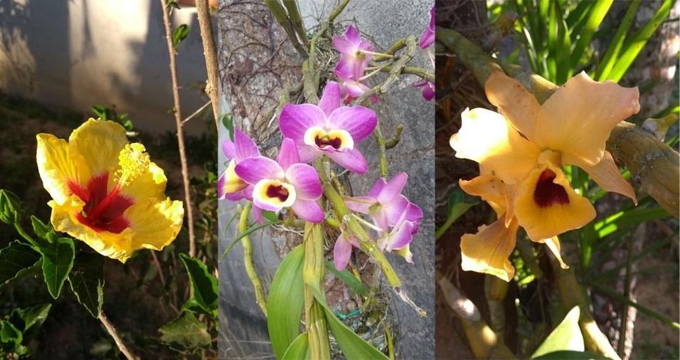 Maria do Rosario Campos, de Mairiporã (SP), enviou fotos das flores que plantou em sua chácara