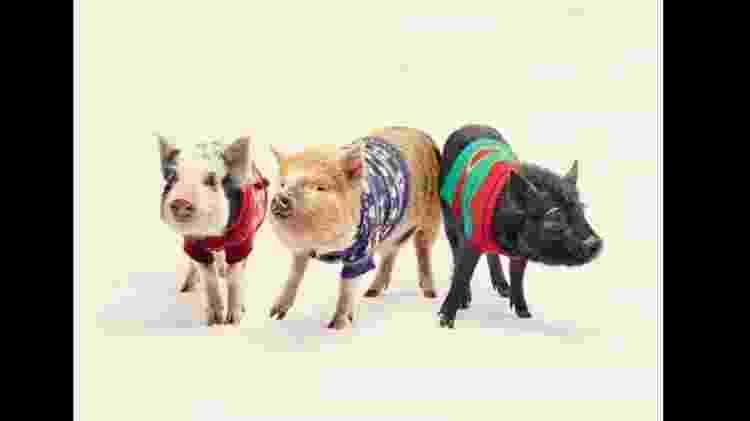 Reprodução/Kew Little Pigs