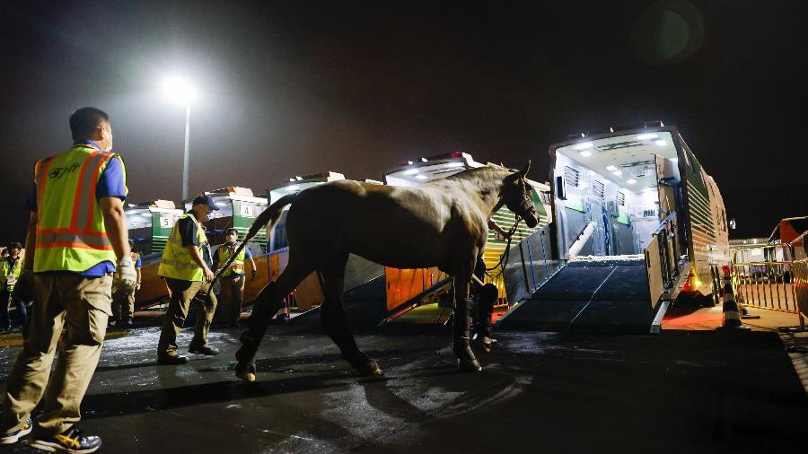 Cavalos de adestramento chegam ao aeroporto Haneda, no Japão, para as Olimpíadas de Tóquio - Yusuke Nakanishi/FEI