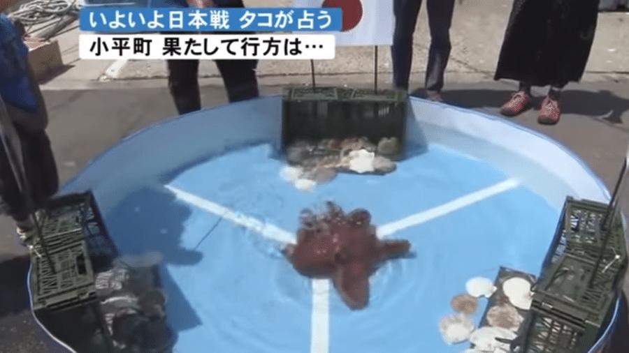 Polvo Rabiot não viu os últimos capítulos do Japão na Copa - Reprodução/YouTube