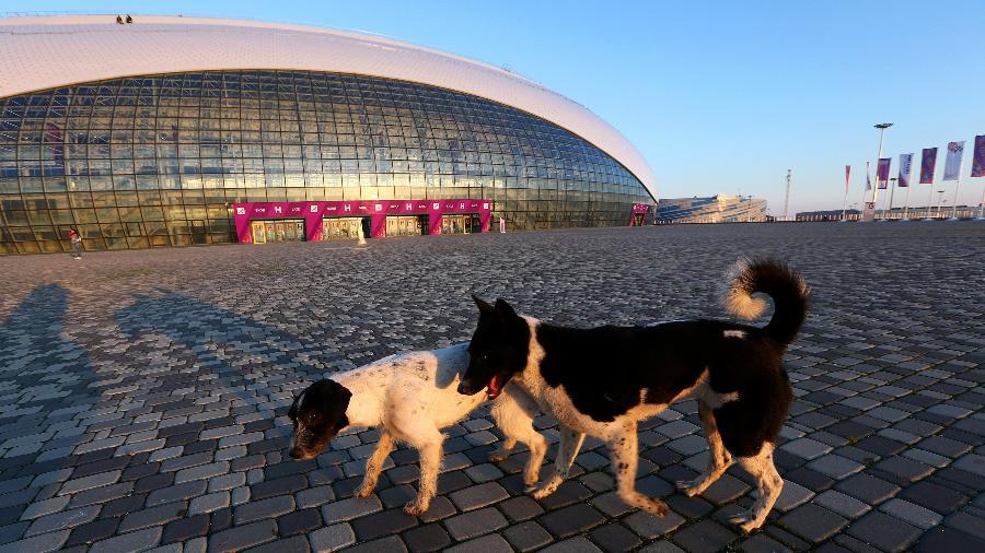 Cachorros sem dono nas ruas de Sochi, uma das sedes da Copa de 2018 - Quinn Rooney/Getty Images