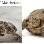 Mascherano teve dificuldades para conseguir alcançar Mbappé na velocidade - Reprodução/Twitter