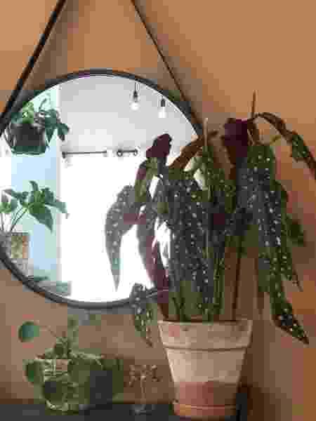 begonia maculata raiana plantados - Arquivo pessoal - Arquivo pessoal