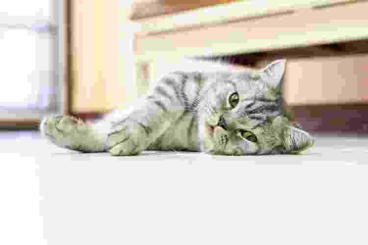 Tapete gelado ou mesmo um chão mais refrescante já ajudam os pets a se refrescarem no verão - Getty Images/iStockphoto - Getty Images/iStockphoto