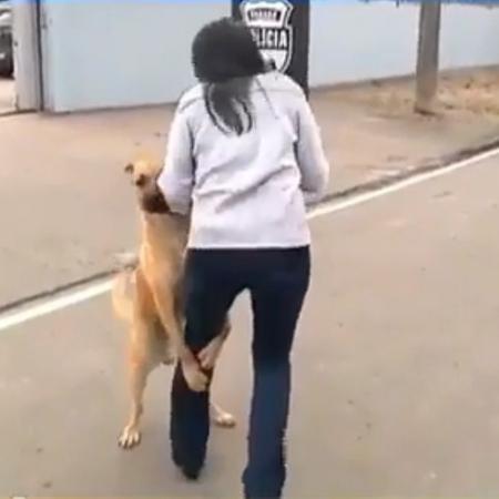 """Jornalista do SBT é atacada por """"cachorro tarado"""" - Reprodução/Rede Massa/SBT"""