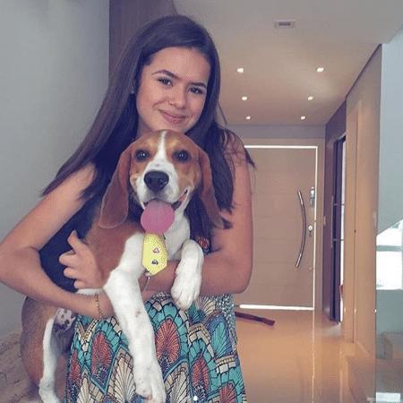 Maisa e seu beagle Bandeirinha - Reprodução/Instagram