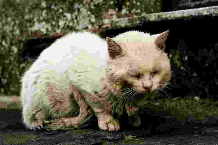 Legislação parece ser insuficiente para coibir os atos de maus-tratos a animais - Getty Images - Getty Images