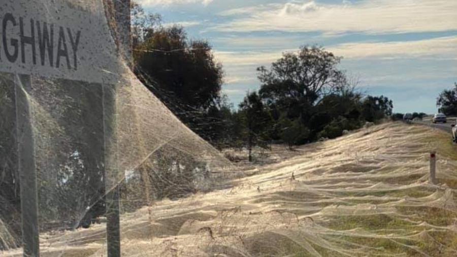 Teias de aranha cobrem campos na Austrália - Reprodução/Reddit