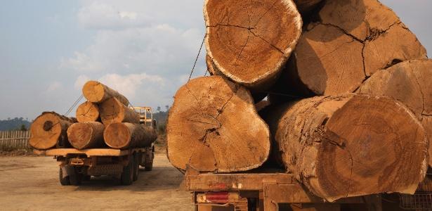 Caminhoes com toras de madeira ilegal apreendidas pelo Ibama na região de Novo Progresso, no Pará - Lalo de Almeida/ Folhapress