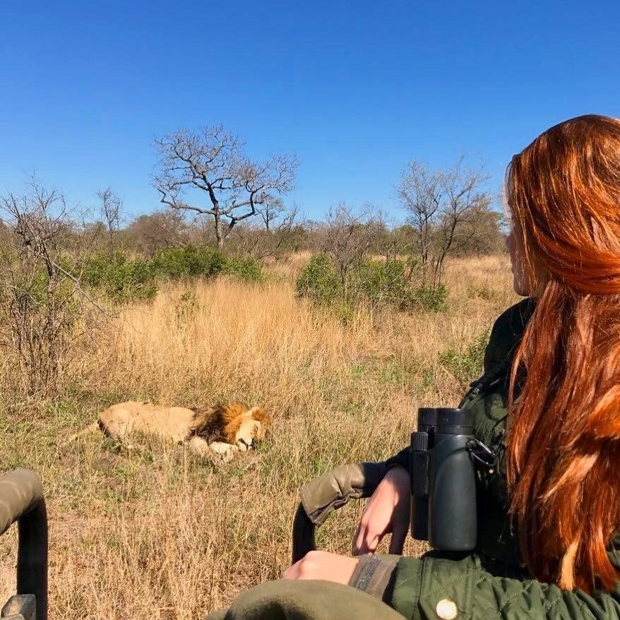Marina observa um leão relaxando em seu habitat natural na África do Sul