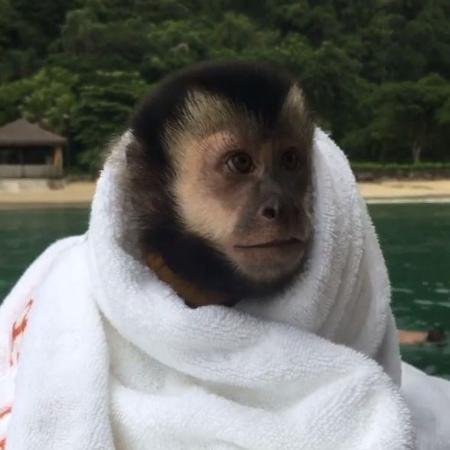 Twelves, o macaco do cantor Latino - Reprodução/Instagram