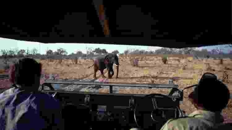 Turistas observando os elefantes no Parque Nacional Hwange, maior reserva do Zimbábue - Francois LOCHON/Gamma-Rapho via Getty Images - Francois LOCHON/Gamma-Rapho via Getty Images