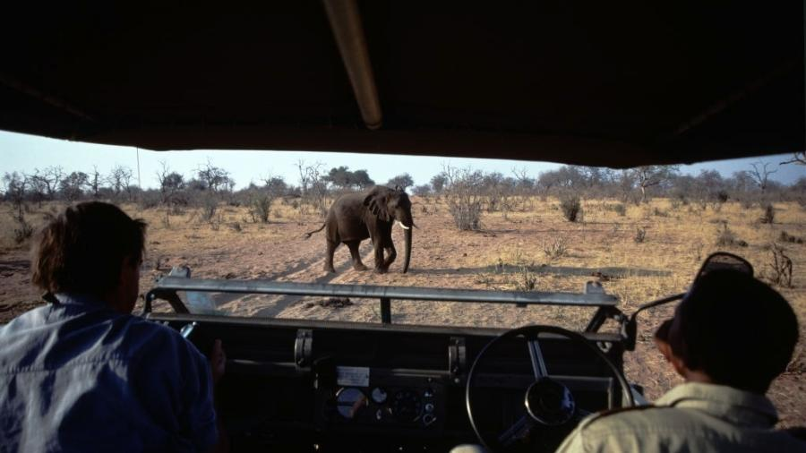 Turistas observando os elefantes no Parque Nacional Hwange, maior reserva do Zimbábue - Francois LOCHON/Gamma-Rapho via Getty Images