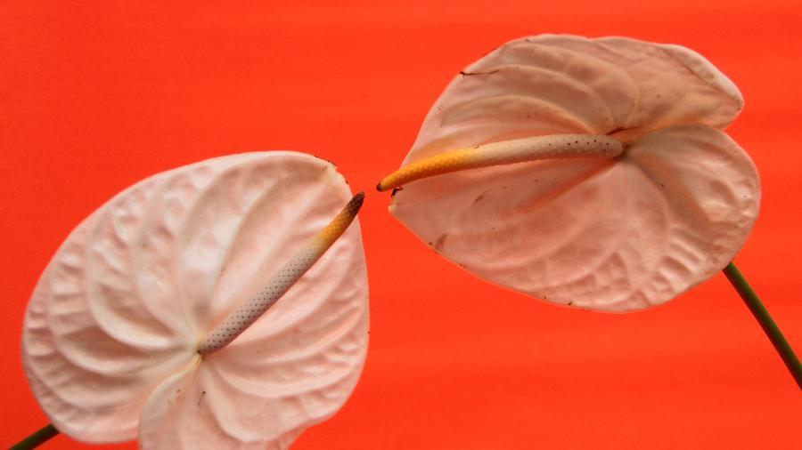 Erveira ensina banhos de ervas para aumentar a libido de cada signo - Dainis Graveri/Unsplash