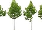 Burocracia rege remoção de árvores seja em terrenos privados ou calçadas - Getty Images