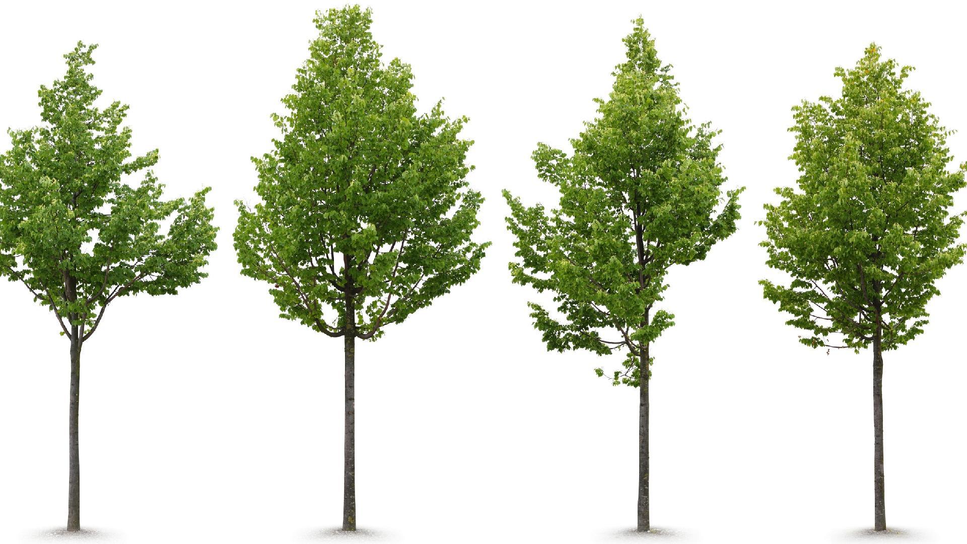 Burocracia rege remoção de árvores seja em terrenos privados ou calçadas -  26 09 2016 - UOL Universa 70d589a9d3b