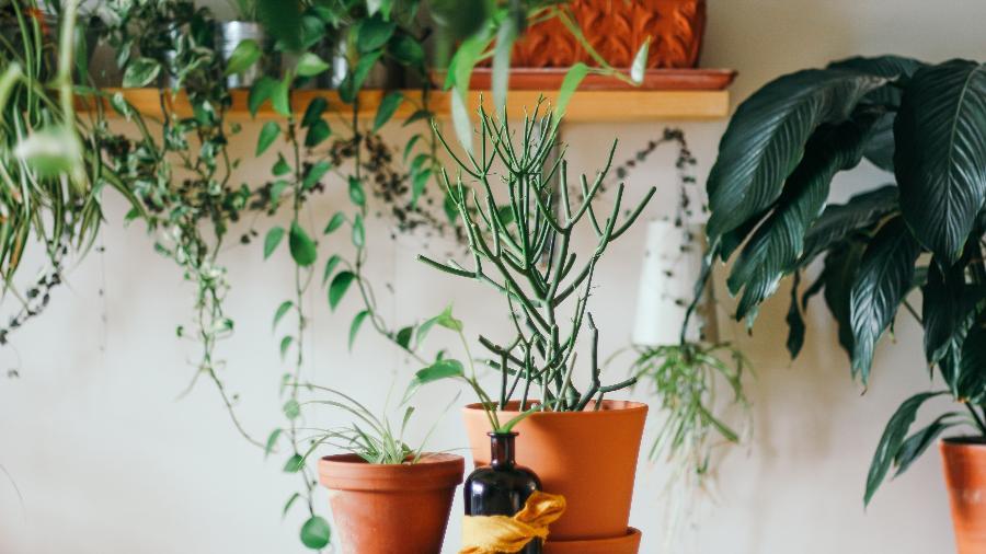 Terra, fogo, água e ar: plantas que ajudam a equilibrar os quatro elementos - Brina Blum