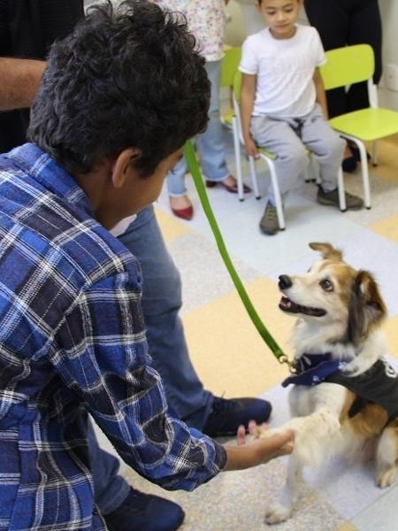 Paciente do Hospital Criança Conceição (RS) participando de pet terapia com o cão Buzz - Arquivo pessoal