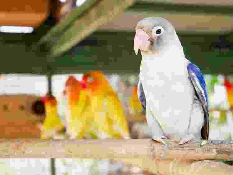 Aves também podem apresentar problemas de comportamento - Getty Images/iStockphoto - Getty Images/iStockphoto