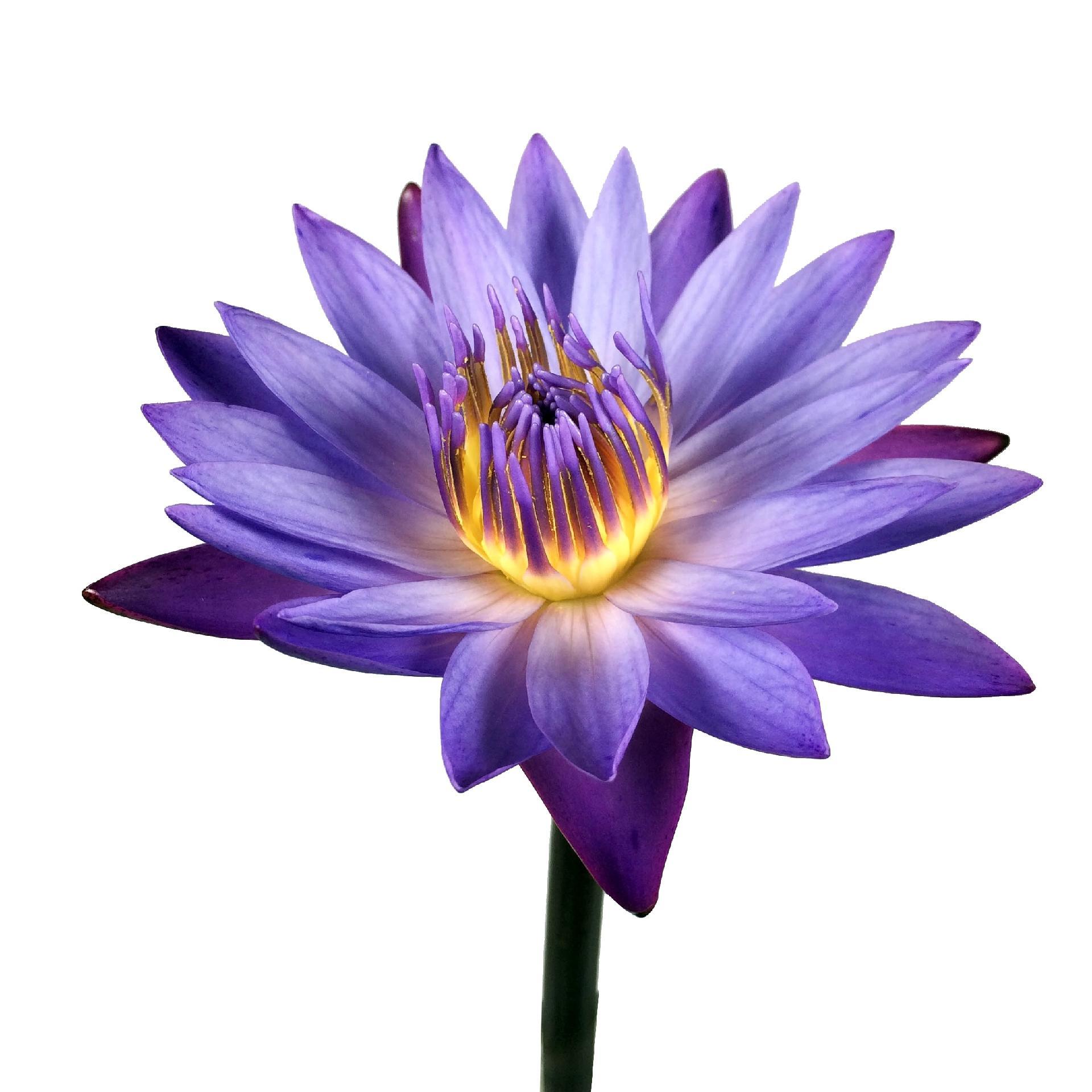 Fotos Novas Variedades De Flores Para Deixar A Casa Linda