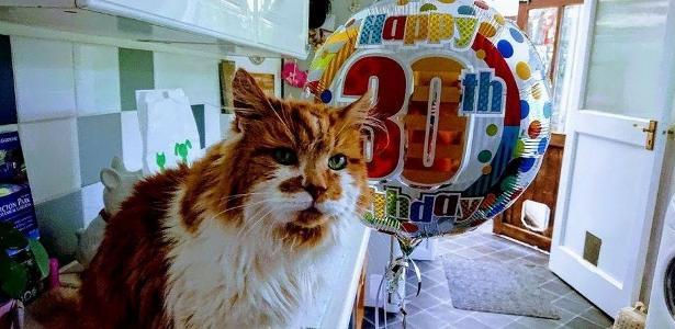 9e49de1f87e75 Gatinho inglês chega aos 30 anos e pode ser o bichano mais velho do ...
