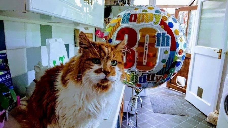 Rubble, o gato mais velho do mundo, morreu aos 31 anos - Reprodução/Facebook