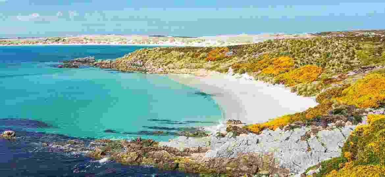 Praia em Gypsy Cove, nas ilhas Falkland (Malvinas) - Cheryl Ramalho/Getty Images/iStockphoto