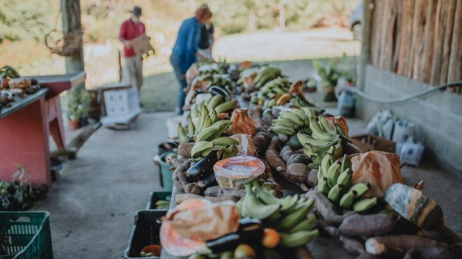 Projeto nasceu para ajudar a evitar fome, e má alimentação, na pandemia - Divulgação