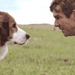 """Cena do filme """"Quatro Vidas de Um Cachorro"""" - Divulgação"""