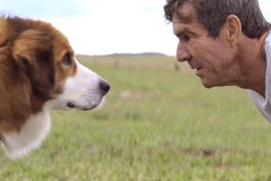 Quatro Vidas De Um Cachorro 2017 Bol Fotos Bol Fotos