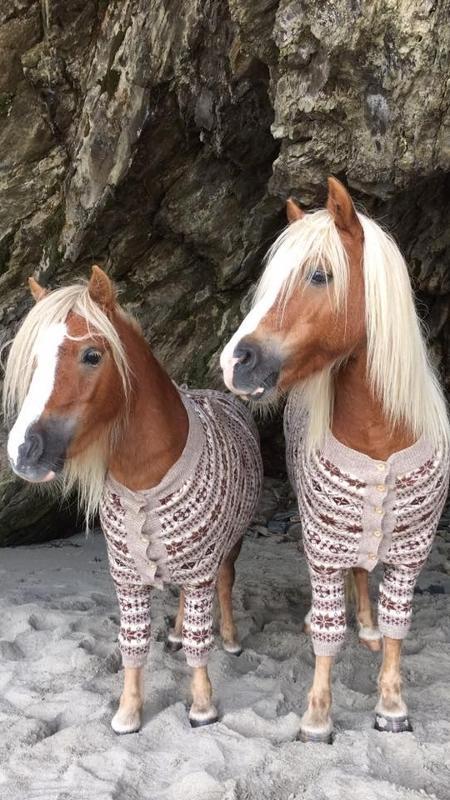 Albert e Ernie são dois pôneis Shetland criados pela treinadora Emma Massingale - Reprodução/Facebook