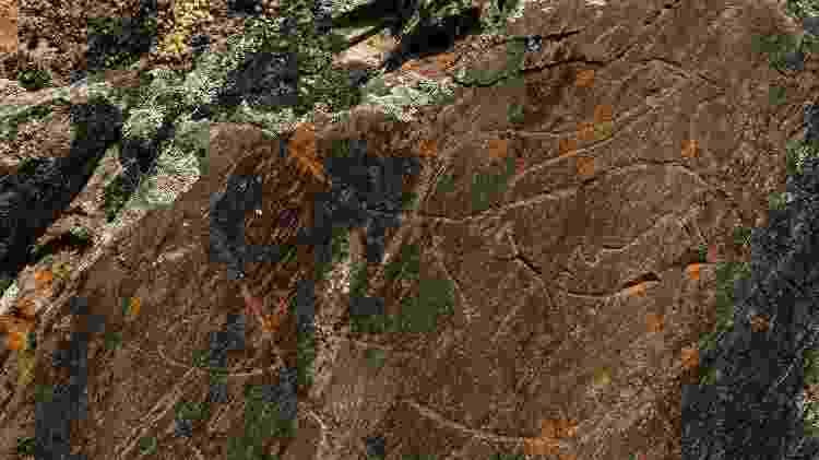 Pinturas rupestres do Vale do Côa e do Parque Arqueológico  - Associação de Turismo do Porto e Norte