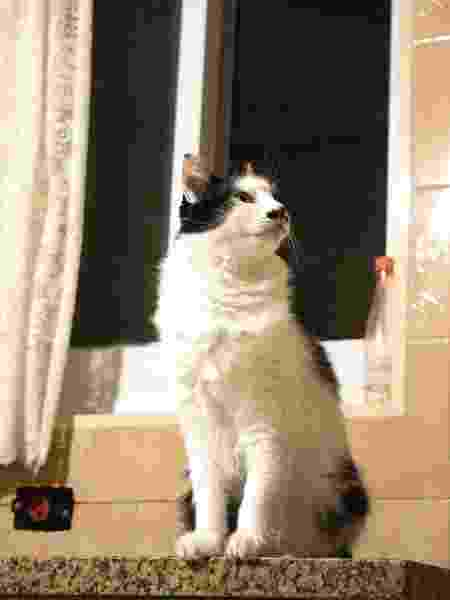 A gatinha Mica, de 11 anos - Melissa Vassalli - Melissa Vassalli
