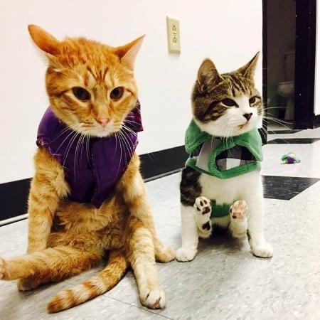 Jesse e Willie, gatos com o mesmo tipo de lesão, se tornaram melhores amigos - Reprodução Facebook