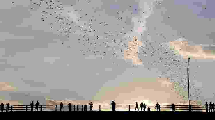 Pessoas vão à Congress Street Bridge para observar morcegos - Getty Images - Getty Images