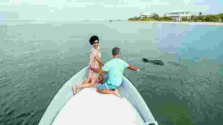 Golfinhos chegam bem perto dos humanos em Captiva - Divulgação/Visit Florida - Divulgação/Visit Florida