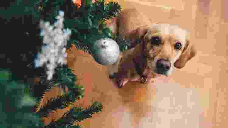Tem pet em casa? Neste Natal, vá com árvore artificial - Getty Images/iStockphoto - Getty Images/iStockphoto