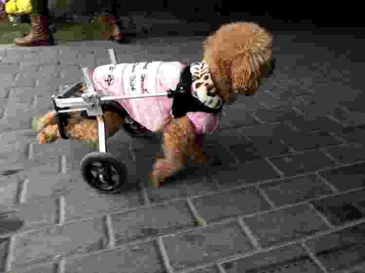 Cão usa cadeira de rodas - Visual China Group via Getty Ima - Visual China Group via Getty Ima