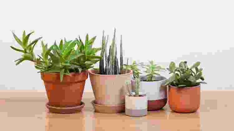 Plantados - vasos - Getty Images/iStockphoto - Getty Images/iStockphoto