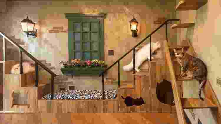 """'Casa dos gatos"""" projetada pela arquiteta Shirlei Proença - Caio Guatelli - Caio Guatelli"""