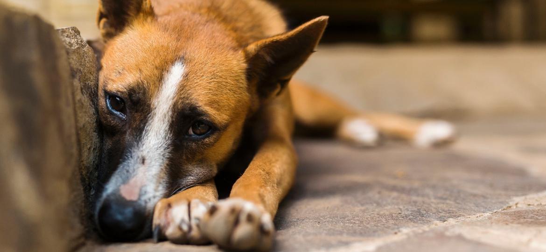 Com a pandemia, abandono de animais tornou-se um problema ainda mais grave - e não só no Brasil - Getty Images/iStockphoto