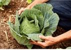 Como repolho, couve e brócolis ajudam a impedir o surgimento de câncer - GETTY IMAGES