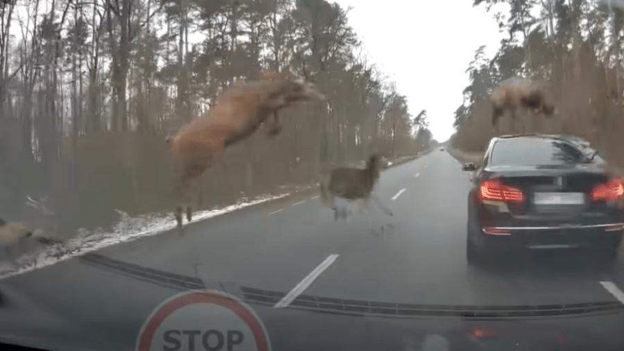 Assustados, animais correram de volta para a floresta após encontro com os veículos - Reprodução/YouTube/Stop Cham