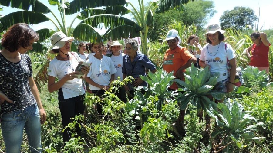 Antes da pandemia, mulheres agricultoras do Pajeú (PE) se reuniam para compartilhar experiências sobre quintais produtivosArquivo - Arquivo