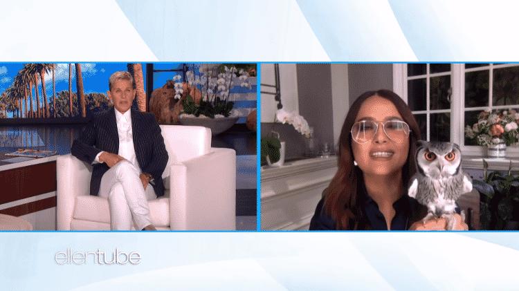 Salma Hayek relembra incidente de sua coruja de estimação com Harry Styles em conversa com Ellen DeGeneres - Reprodução/YouTube - Reprodução/YouTube