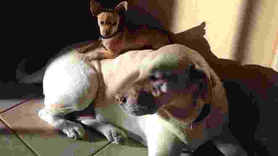 A labradora Maggie foi adotada em 2005 e já serviu de cama para outros 25 cachorros abandonados como ela já foi um dia - Michelle Calicchio/Reprodução